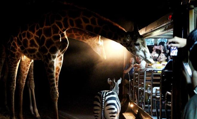 Night Safari Zoo Melaka