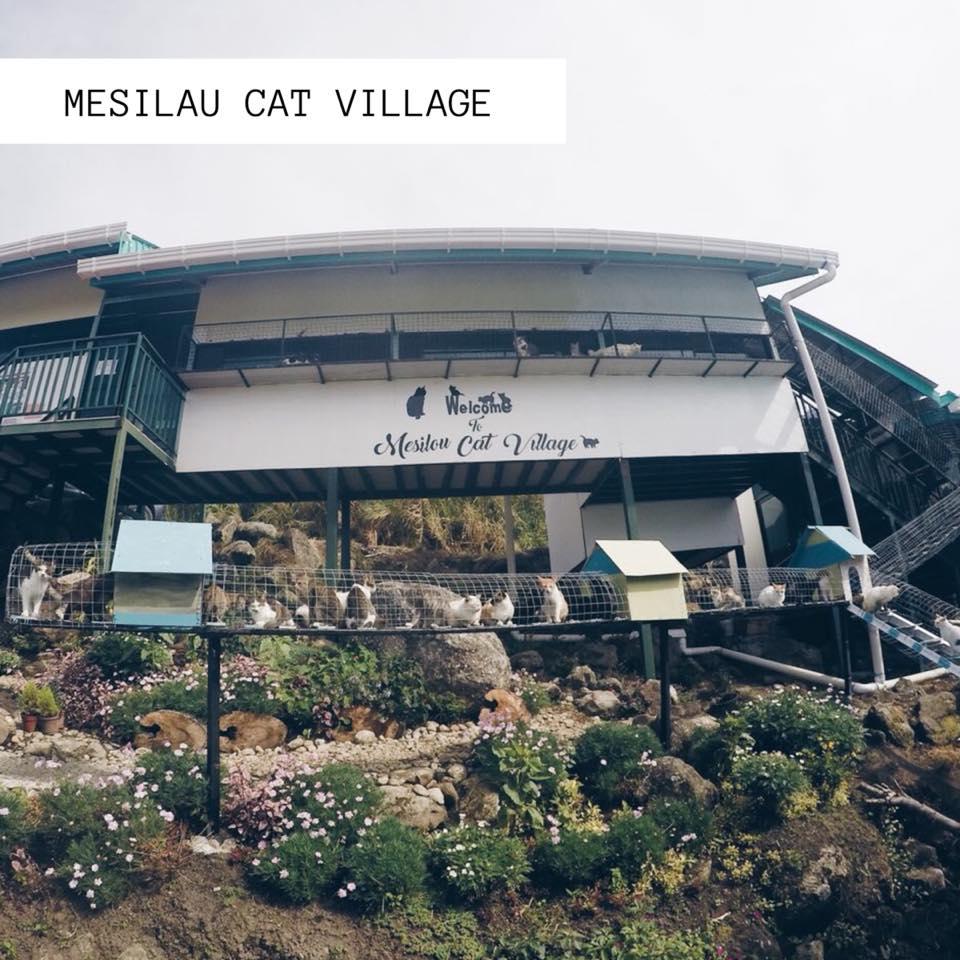 Mesilau Cat Village